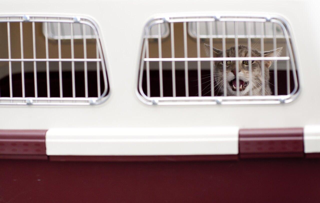 Foto para ilustrar la noticia en la que se ve a un gato dentro de un transportín.